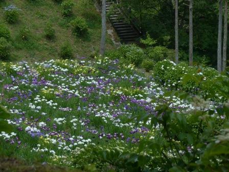 白猪の滝・花菖蒲園 9