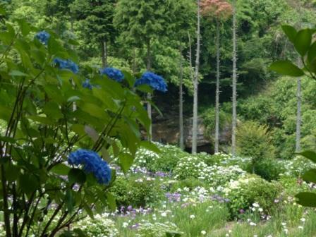 白猪の滝・花菖蒲園 10