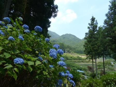 白猪の滝・花菖蒲園 11
