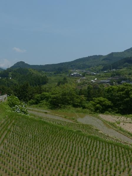 棚田風景 2