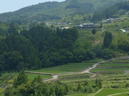 棚田風景 3