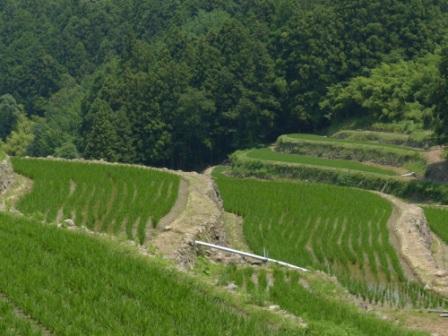 棚田風景 5