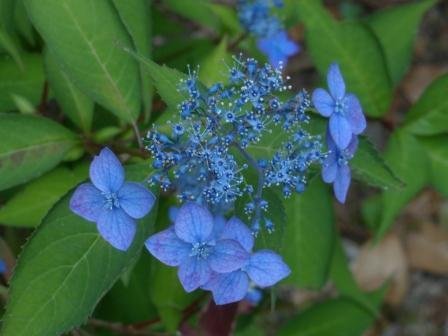惣河内神社 藍姫 1
