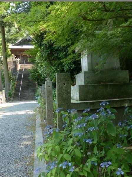惣河内神社 紫陽花の咲く風景 3