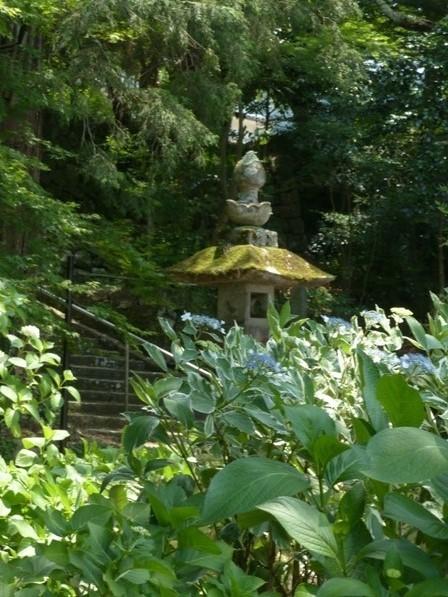 惣河内神社 紫陽花の咲く風景 4