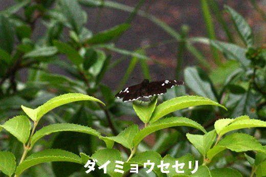 IMG_7704_.jpg