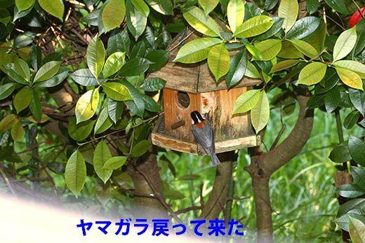 IMG_7822.jpg