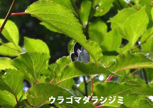 IMG_7878.jpg