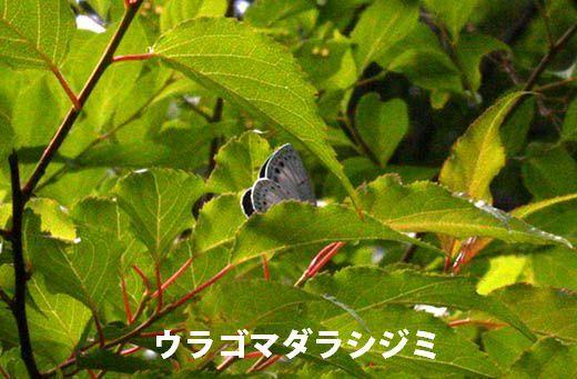 IMG_7881.jpg