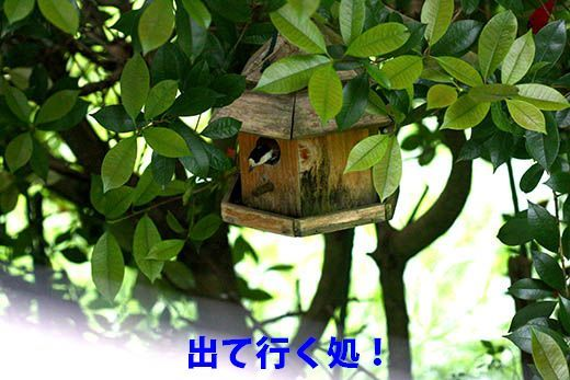 IMG_7925_.jpg