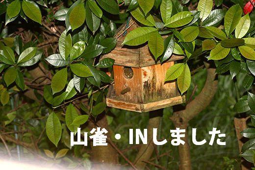 IMG_7934_.jpg