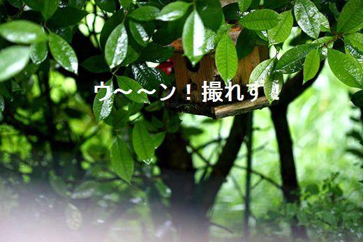 IMG_8833_.jpg