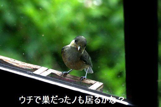 IMG_9041_.jpg
