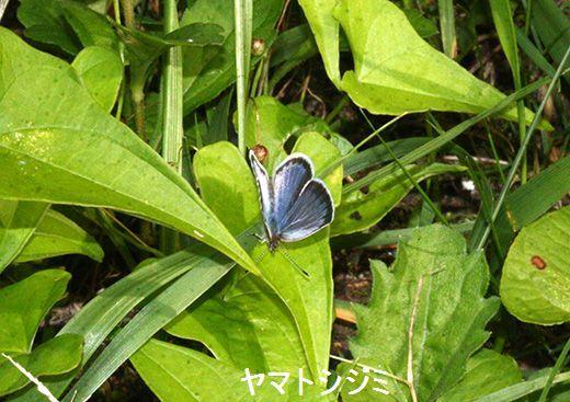 IMG_9319_.jpg