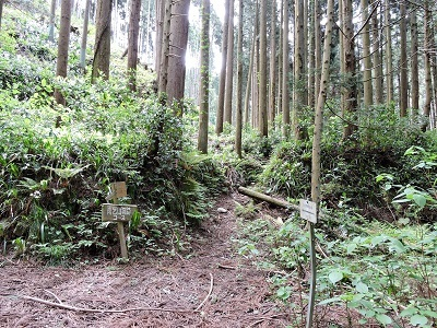 丸岡町雨乞山城跡の下見2017年5月5日 (8)
