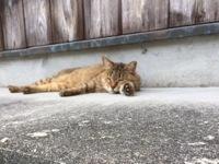 IMG_4859 ネコ