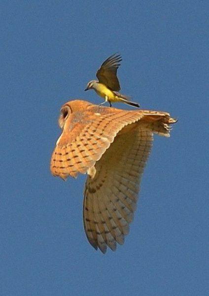 タダ乗りする鳥