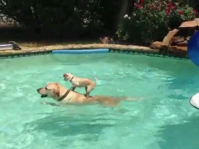 Dogs in Pools