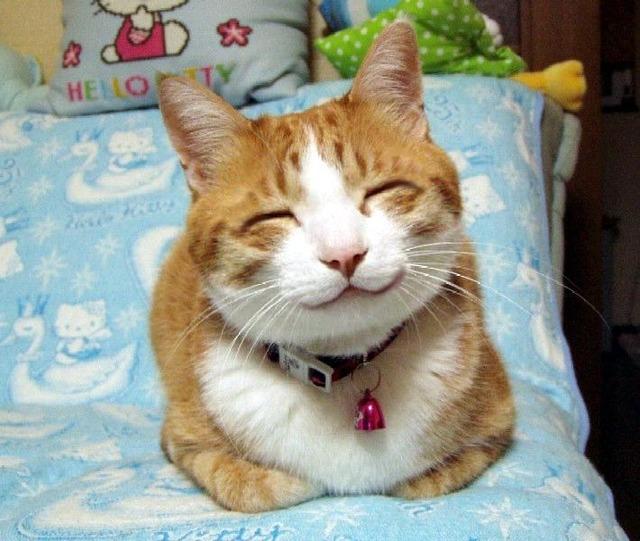 catスマイル