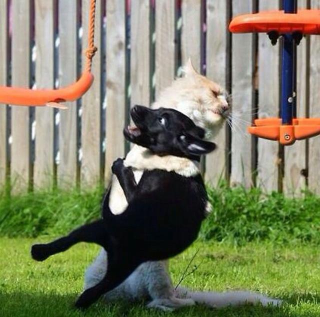 catdogプロレス