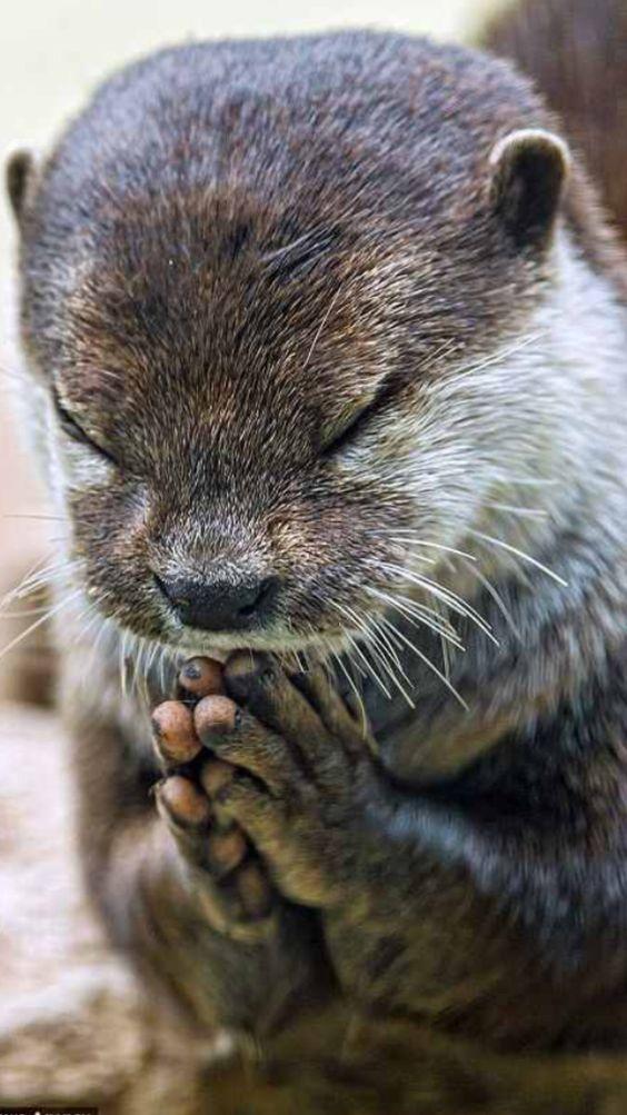 カワウソお祈り