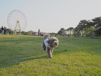 ひたち海浜公園20170430-19
