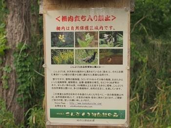 こんぶくろ池自然の森20170503-3