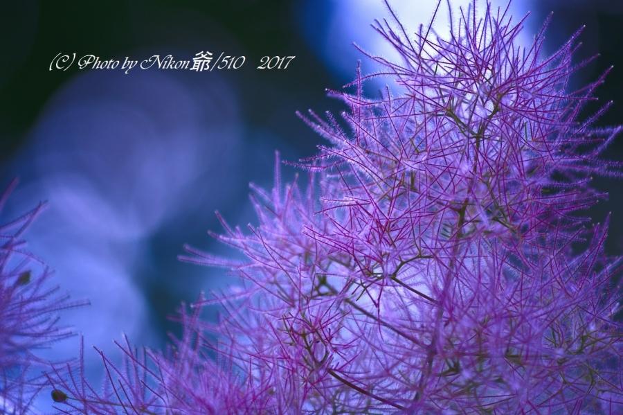 板倉散歩 3SN