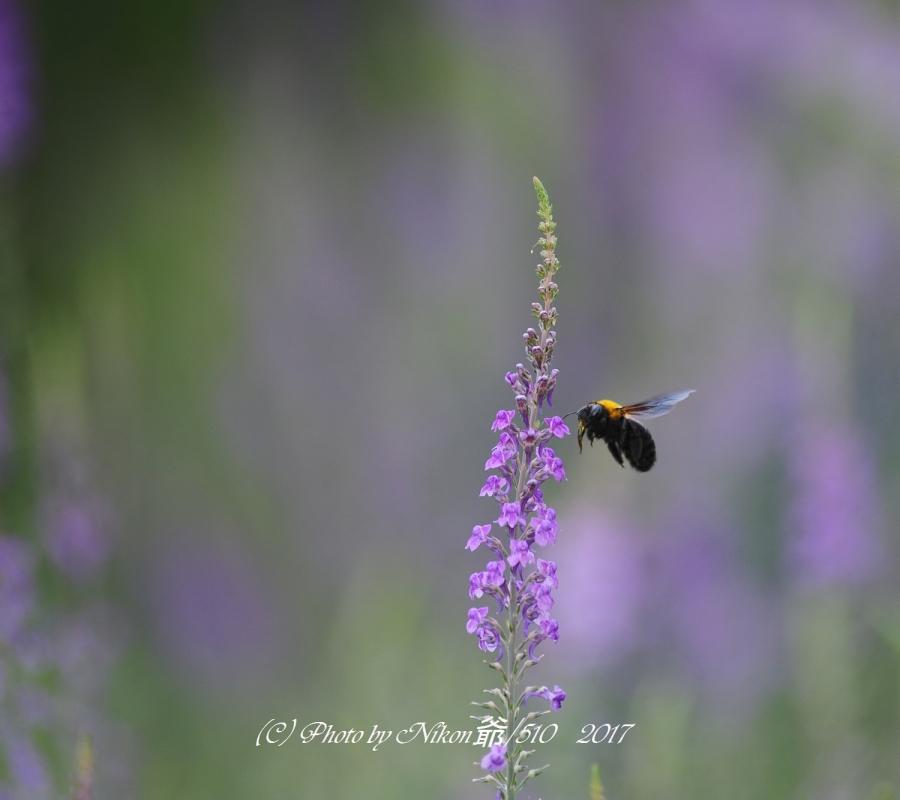 蜂の仕事2SNF