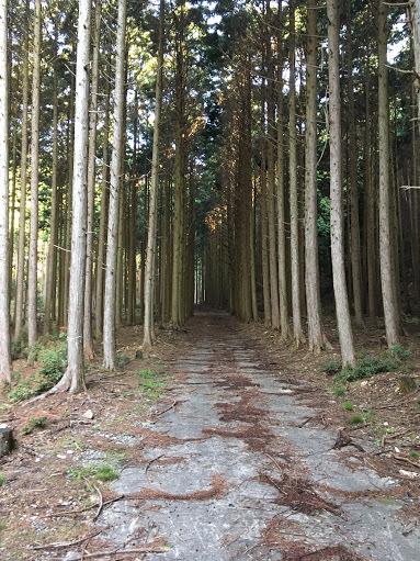 20170428三国山/舗装林道