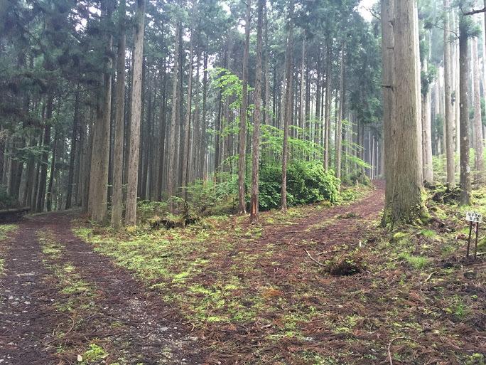 2017カヤマチ山/分岐