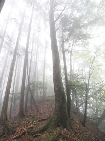 2017カヤマチ山/尾根道