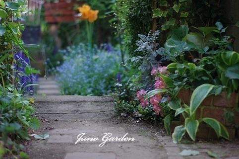 庭入口の花170505