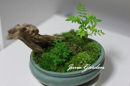 1ミニ盆栽170704