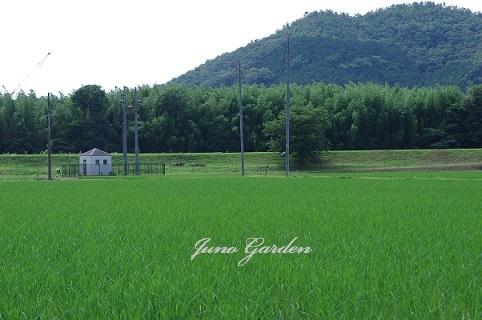 田舎170706