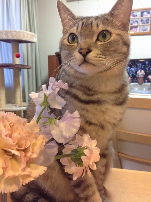 ぎん1年花とぼく