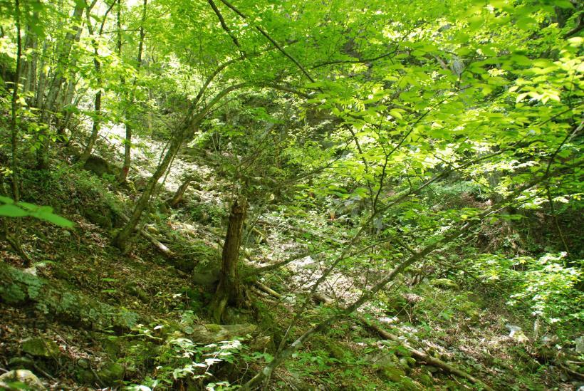 北精進ヶ滝158