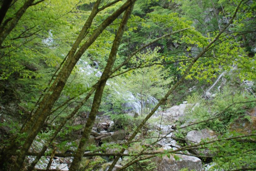 北精進ヶ滝267