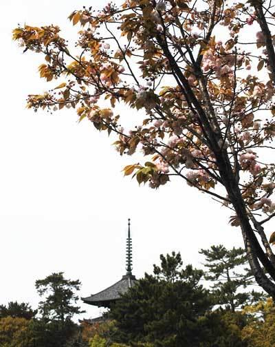 170429興福寺2
