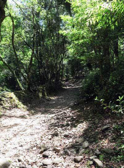 170518春日山原始林へ