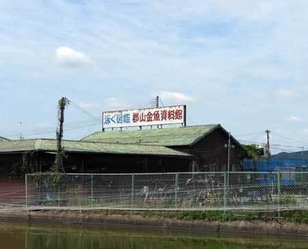 170603金魚資料館