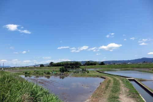 1706003田園風景