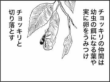 kfc00860-6