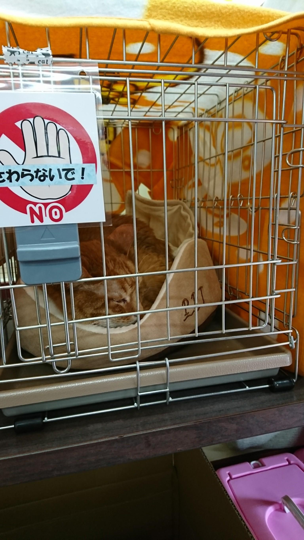 20170618 譲渡会_8