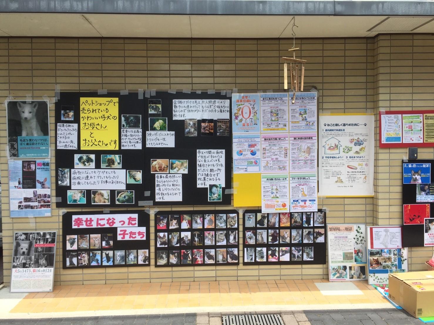 20170618 譲渡会_21