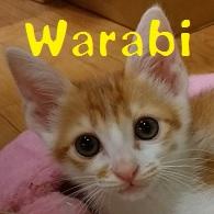 Warabi.jpg