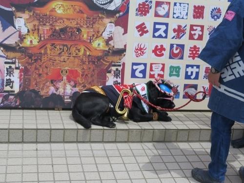 浜松祭り わんこ
