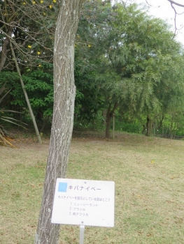 ガーデンパーク キバナイペー