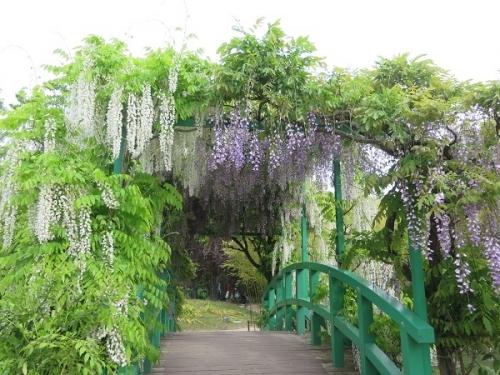 ガーデンパーク 藤の花橋