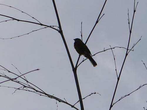 ガーデンパーク 鳥こっこ